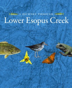 A Journey Into Lower Esopus Creek